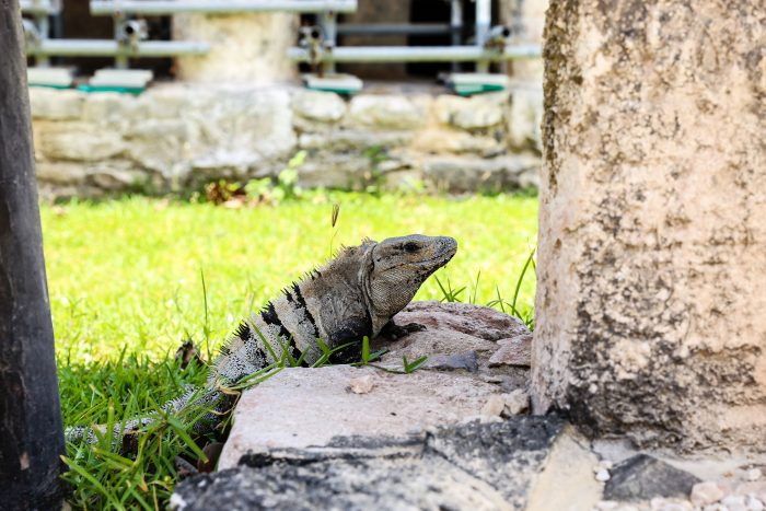 Tulum Guide_Tulum Beach_Tulum_GEMOLOGUE_Liza Urla_Travel Blog 42